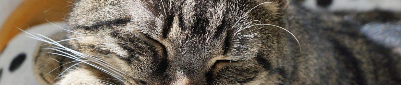 cat-2439140_1920