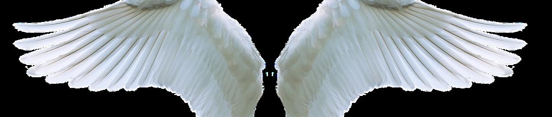 wing-3303028_1280